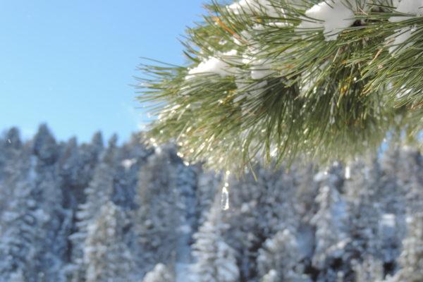 galeria strona zimowa (24)